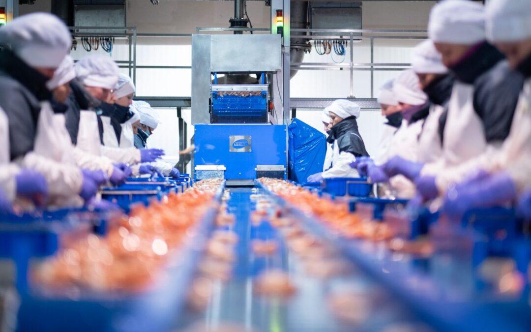Desinfección en la industria alimentaria