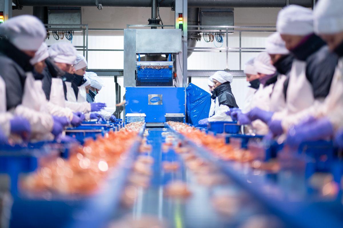 Desinfektion-Lebensmittelindustrie