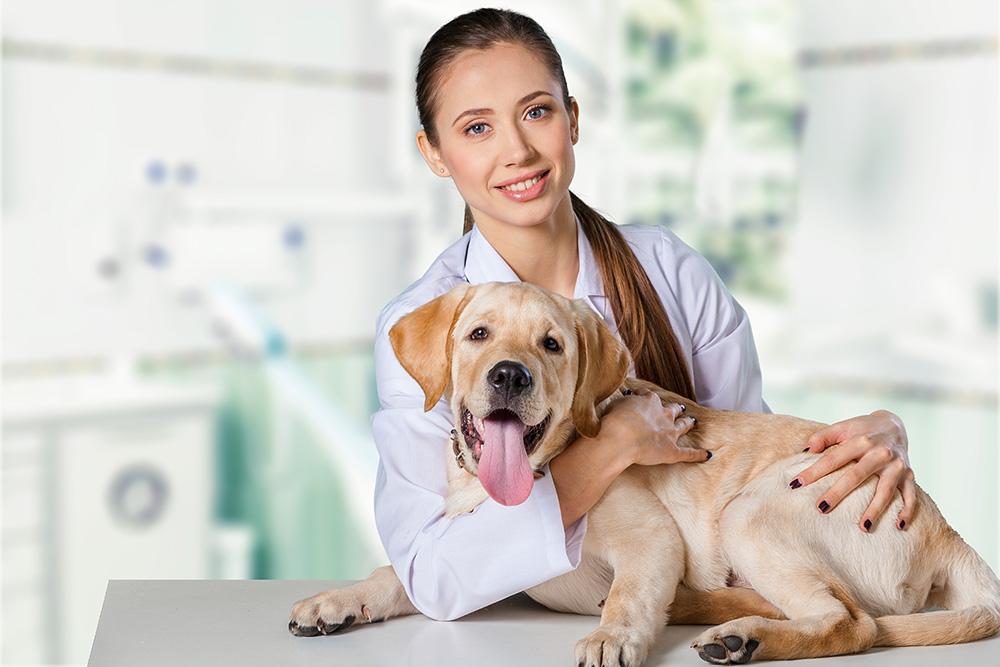 Tierkliniken